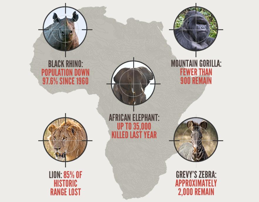 Africa's Poaching Crisis