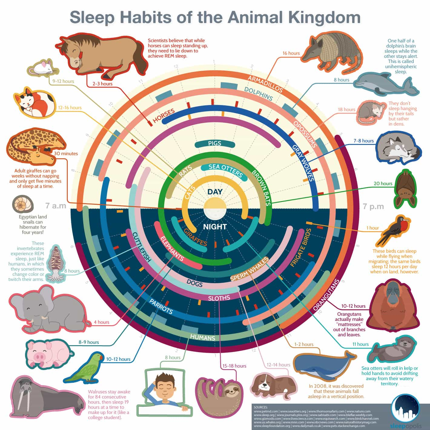 sleep-infographic-8