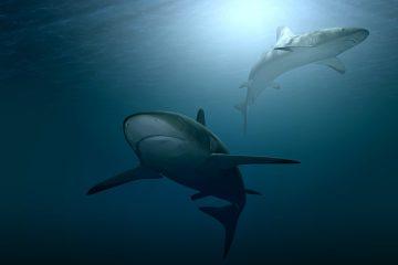 shark-attacks